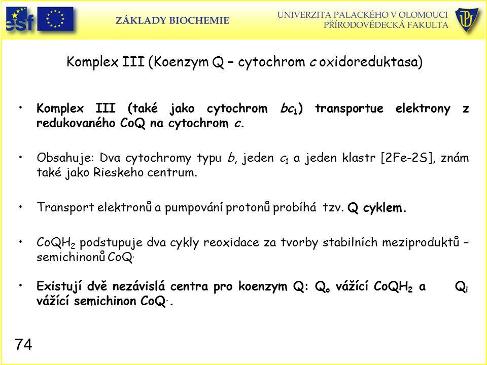 Komplex III (Koenzym Q – cytochrom c oxidoreduktasa)