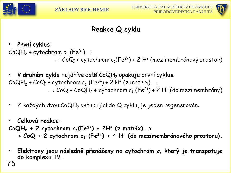 Reakce Q cyklu První cyklus: CoQH2 + cytochrom c1 (Fe3+) 