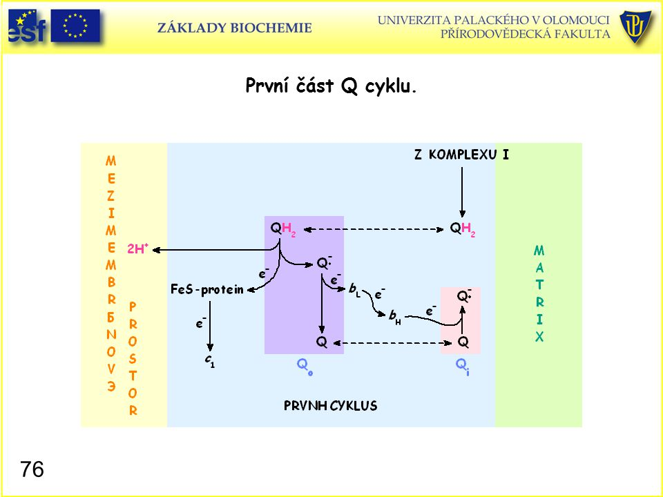 První část Q cyklu. Mitochondrie, Q cyklus I
