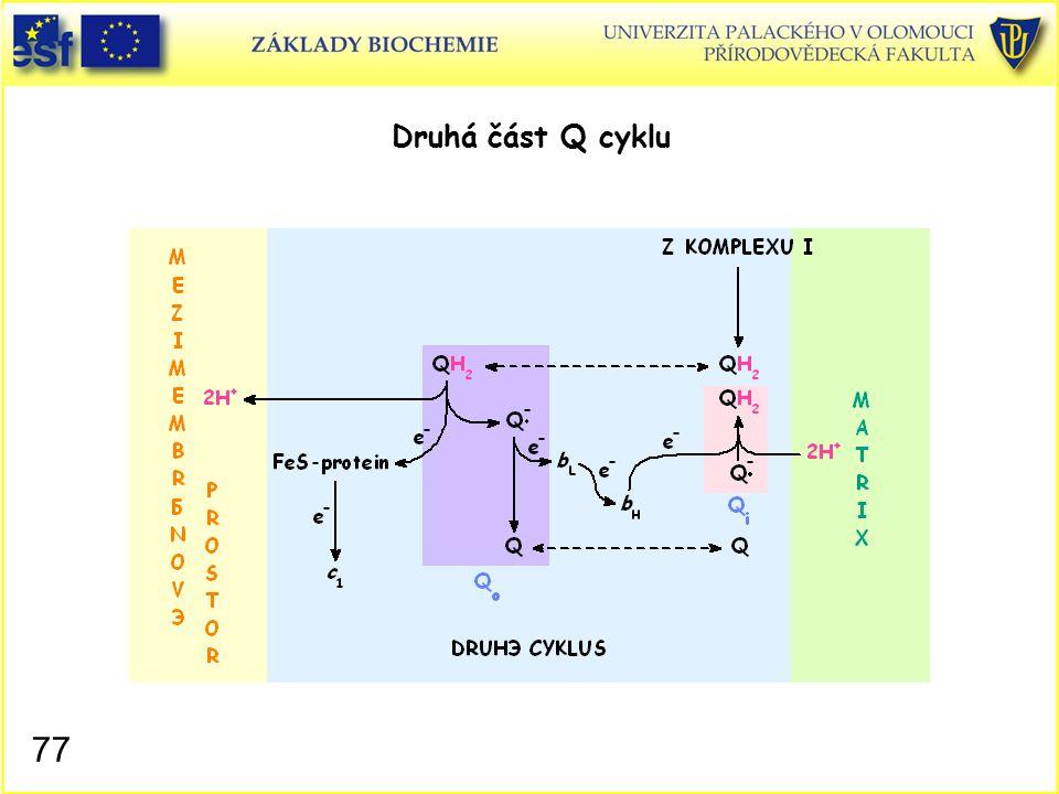 Druhá část Q cyklu Mitochondrie, Q cyklus II