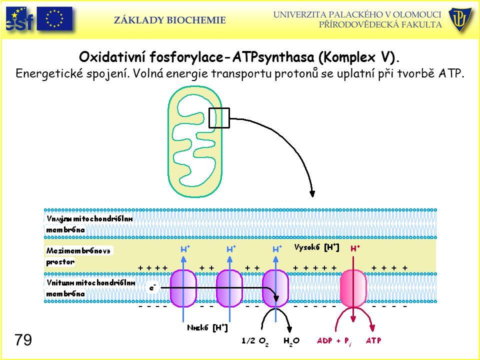 Oxidativní fosforylace-ATPsynthasa (Komplex V). Energetické spojení
