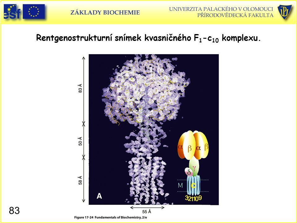 Rentgenostrukturní snímek kvasničného F1-c10 komplexu.