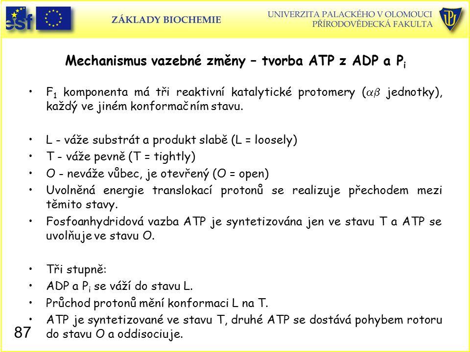 Mechanismus vazebné změny – tvorba ATP z ADP a Pi