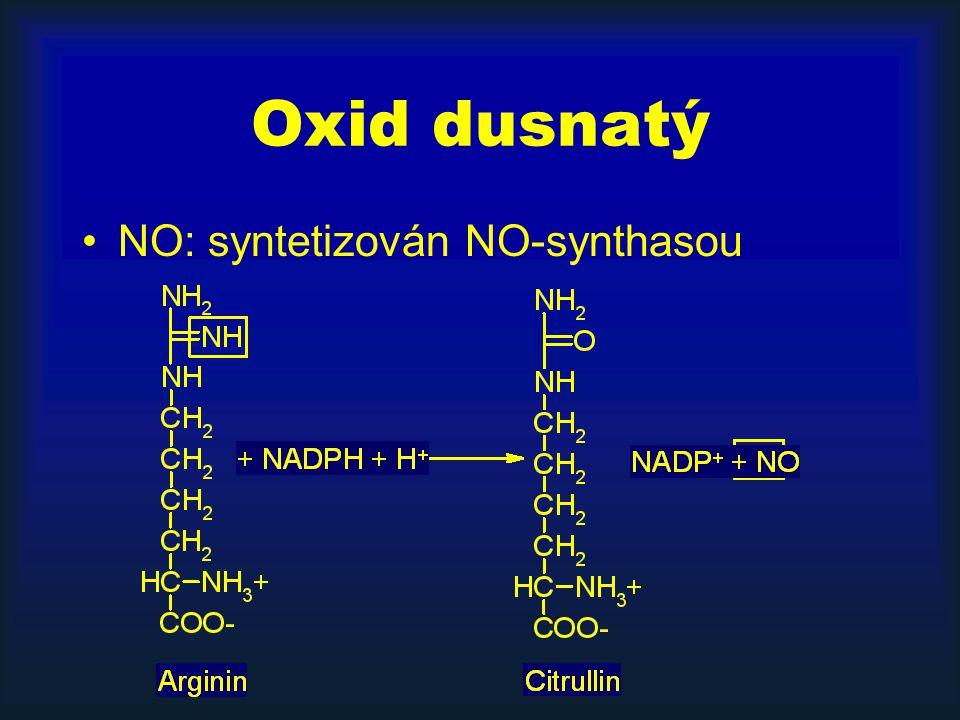 Oxid dusnatý NO: syntetizován NO-synthasou