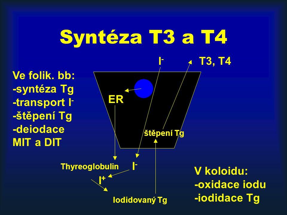 Syntéza T3 a T4 I- T3, T4. Ve folik. bb: -syntéza Tg -transport I- -štěpení Tg -deiodace MIT a DIT.