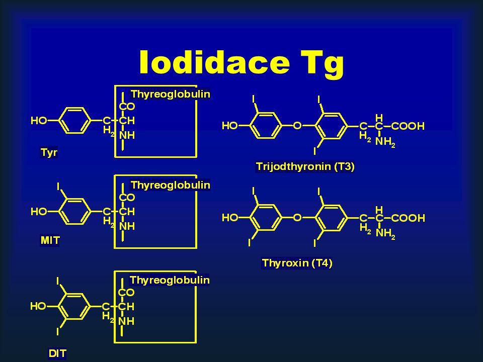Iodidace Tg