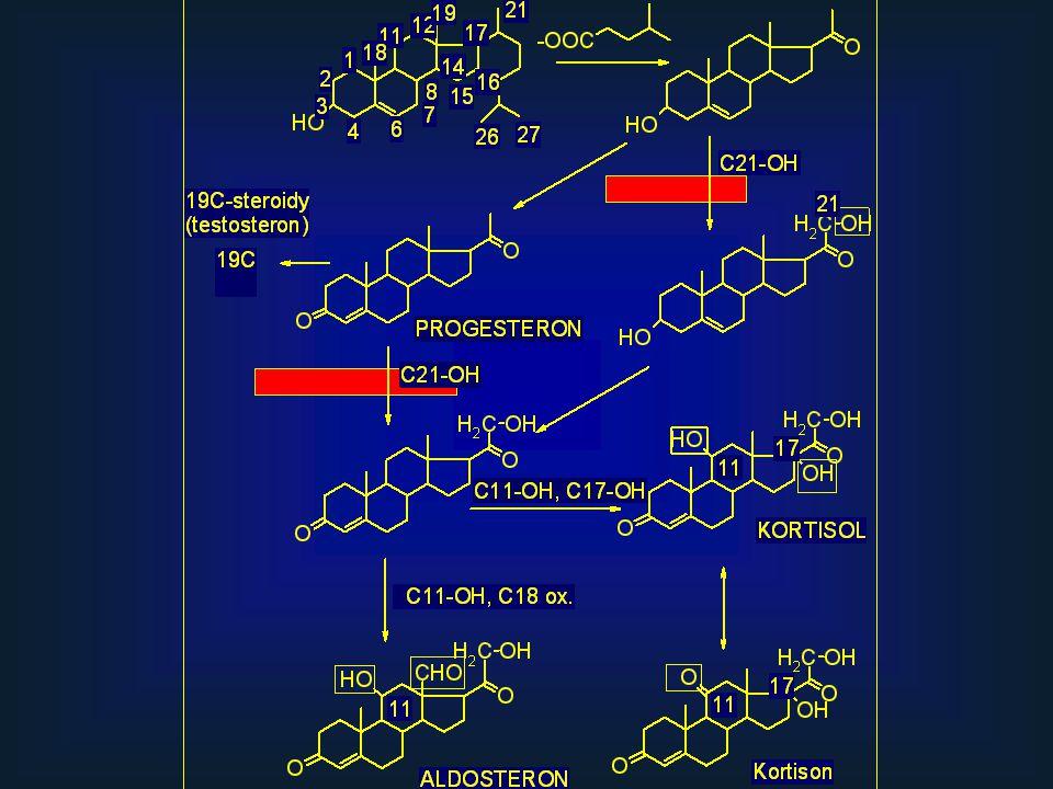 Pregnenolon, delta 5 isomeráza-3beta hydroxydehydrogensasa, kortisON je inaktivní, ve tkáních lze zpět na kortisol 11 beta hydroxysteroiddehydrogenasou