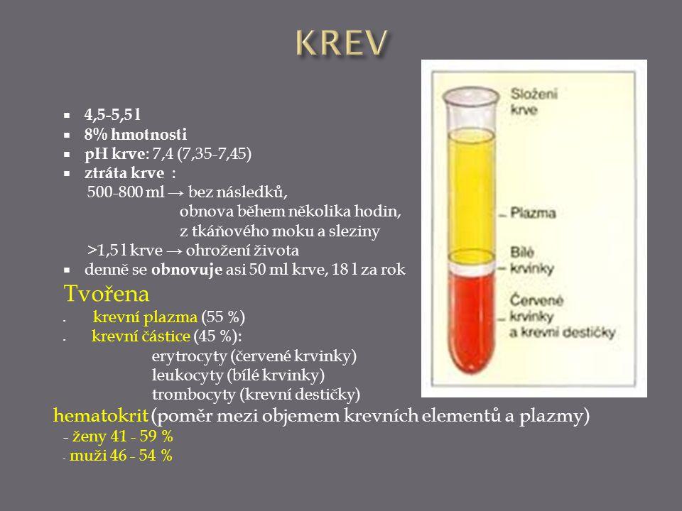 KREV 4,5-5,5 l. 8% hmotnosti. pH krve: 7,4 (7,35-7,45) ztráta krve : 500-800 ml → bez následků,