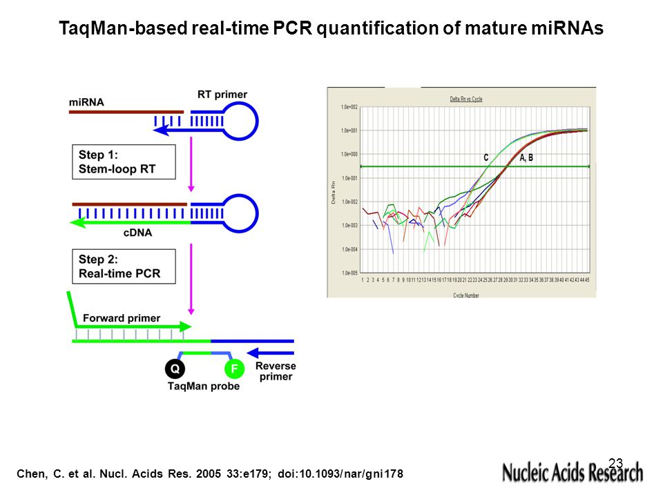 TaqMan-based real-time PCR quantification of mature miRNAs