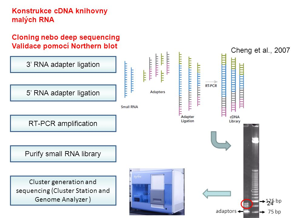 Purify small RNA library