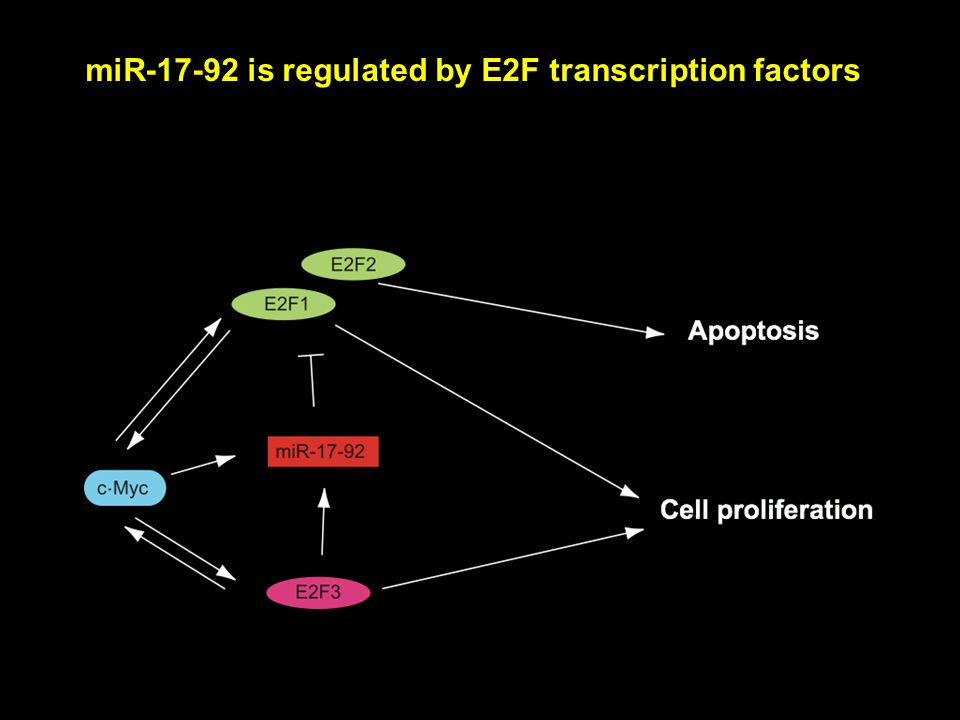 miR-17-92 is regulated by E2F transcription factors