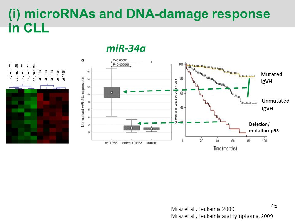 (i) microRNAs and DNA-damage response in CLL