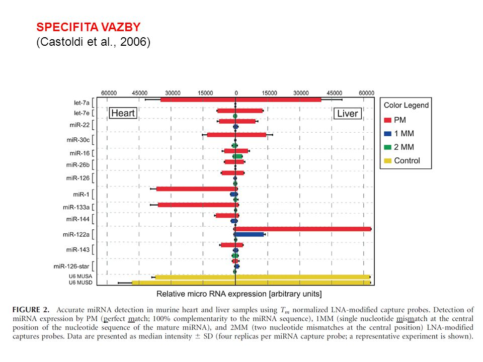 SPECIFITA VAZBY (Castoldi et al., 2006)