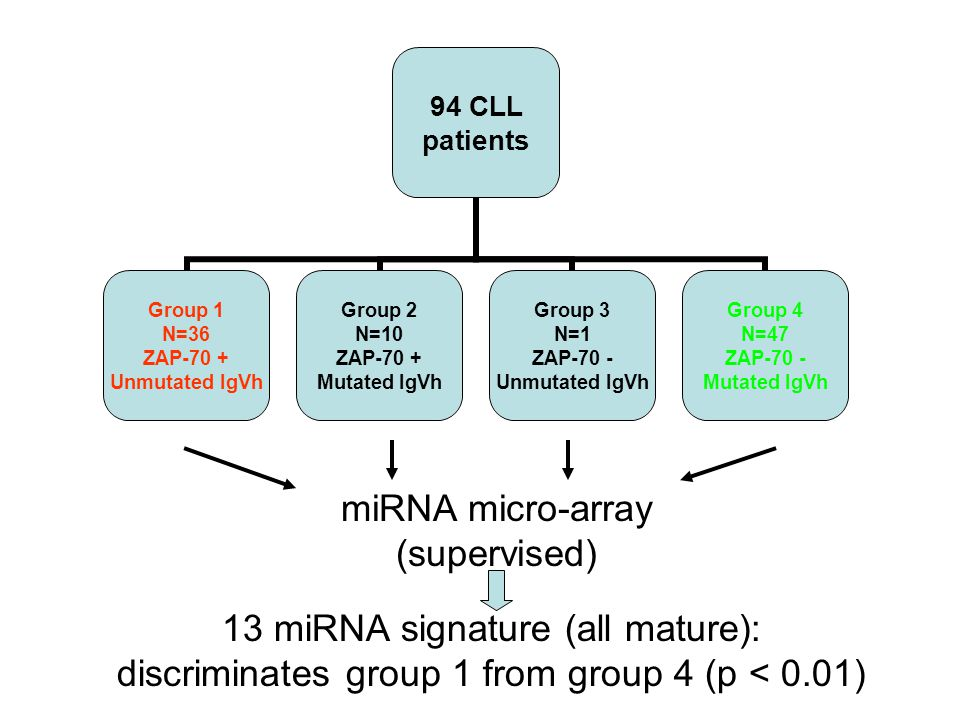 13 miRNA signature (all mature):