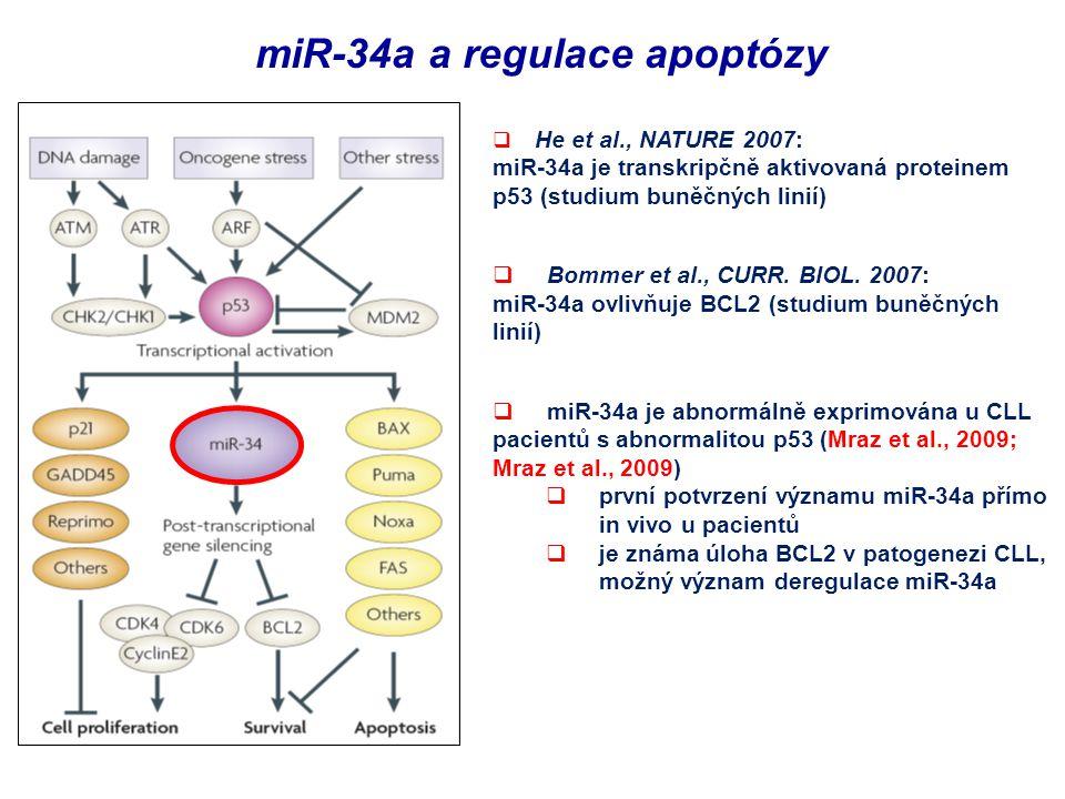 miR-34a a regulace apoptózy