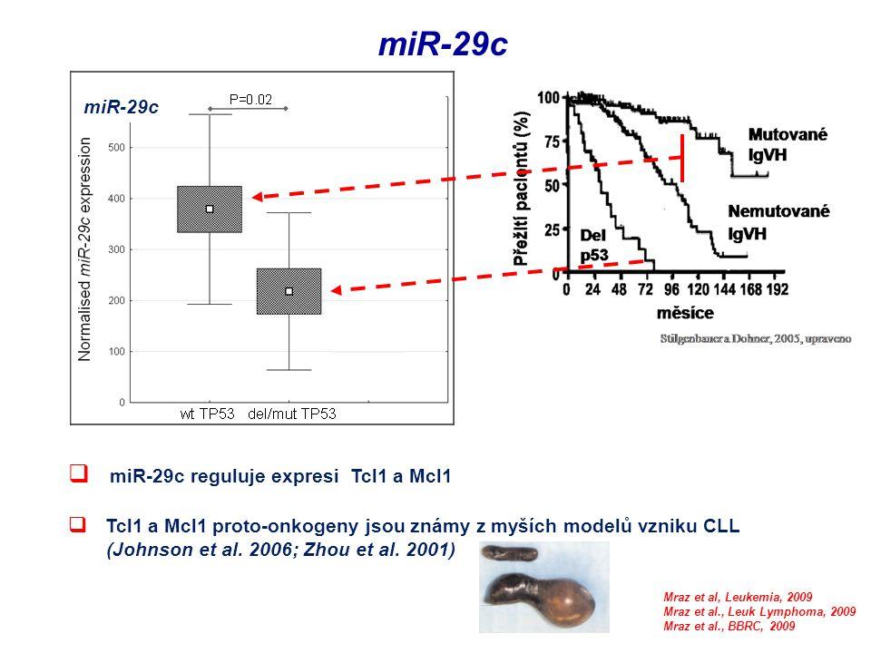 miR-29c miR-29c reguluje expresi Tcl1 a Mcl1