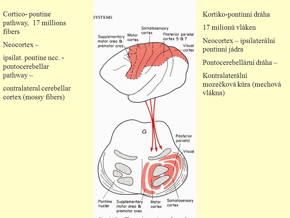 Cortico- pontine pathway, 17 millions fibers