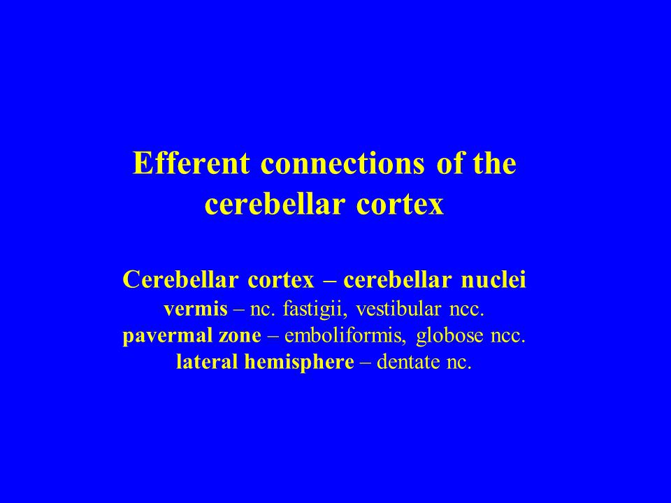 Efferent connections of the cerebellar cortex Cerebellar cortex – cerebellar nuclei vermis – nc.