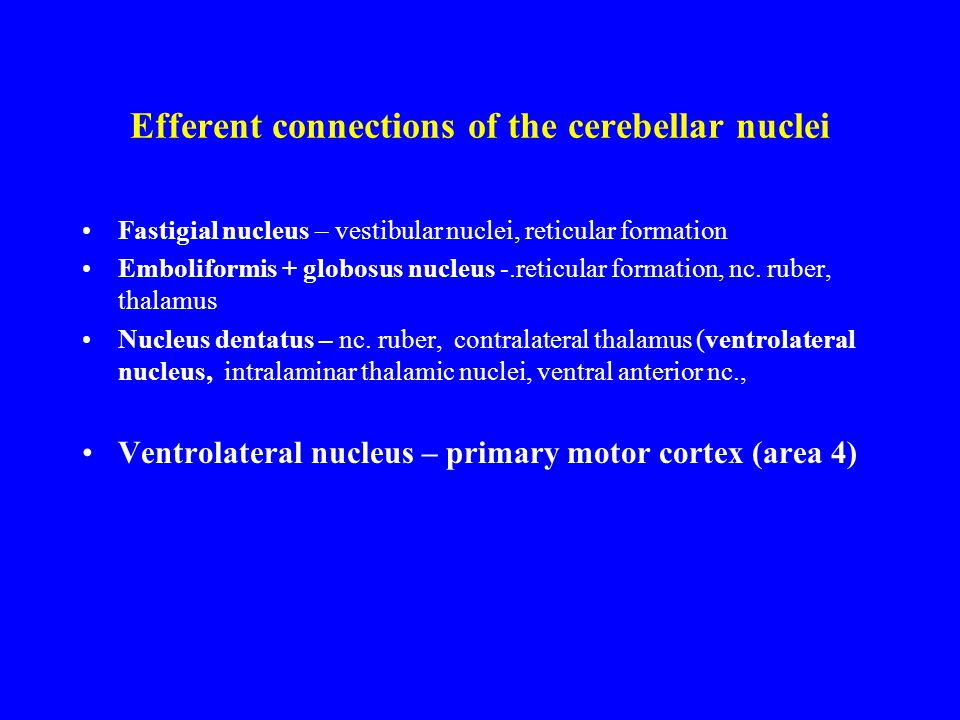 Efferent connections of the cerebellar nuclei