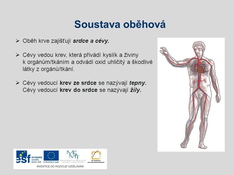 Soustava oběhová Oběh krve zajišťují srdce a cévy.