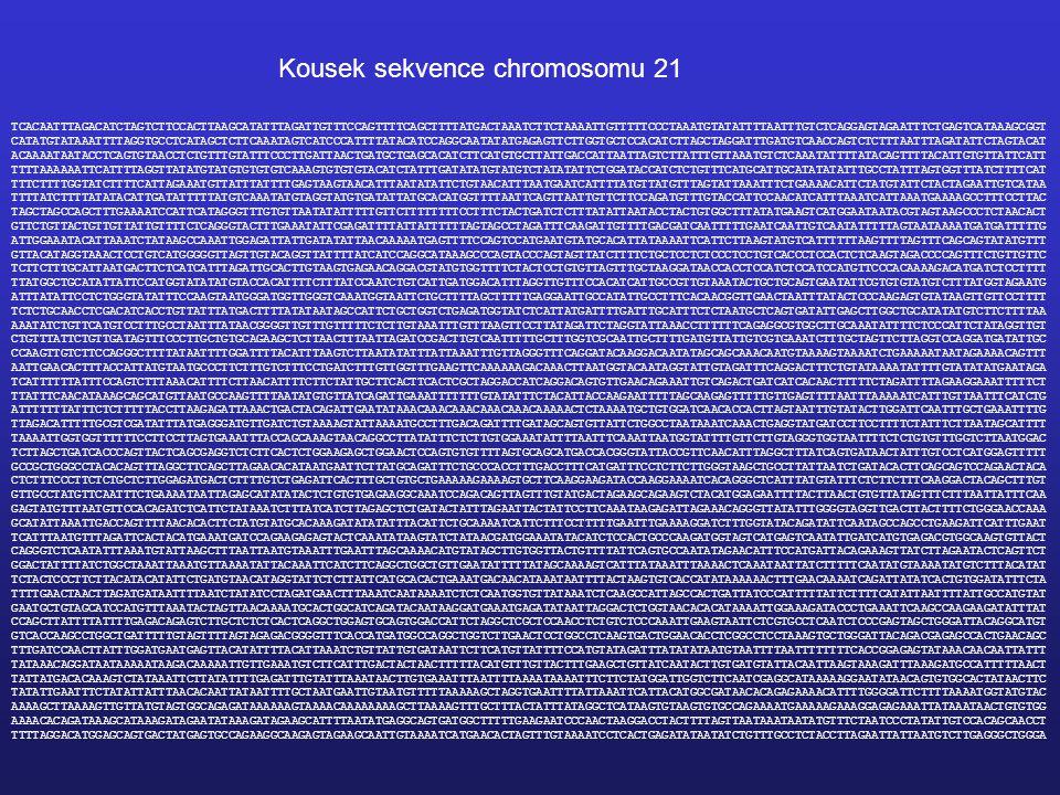 Kousek sekvence chromosomu 21