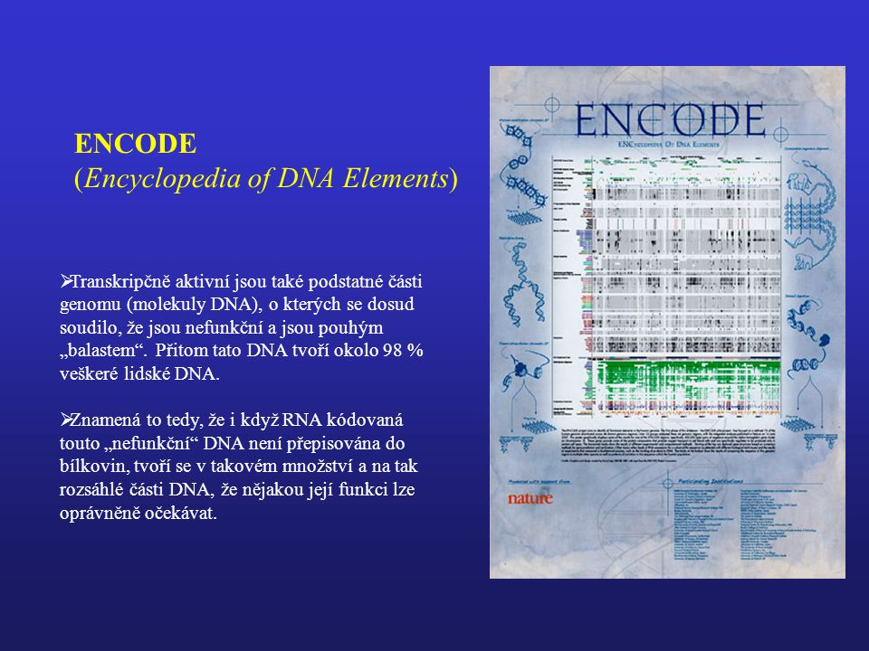 (Encyclopedia of DNA Elements)