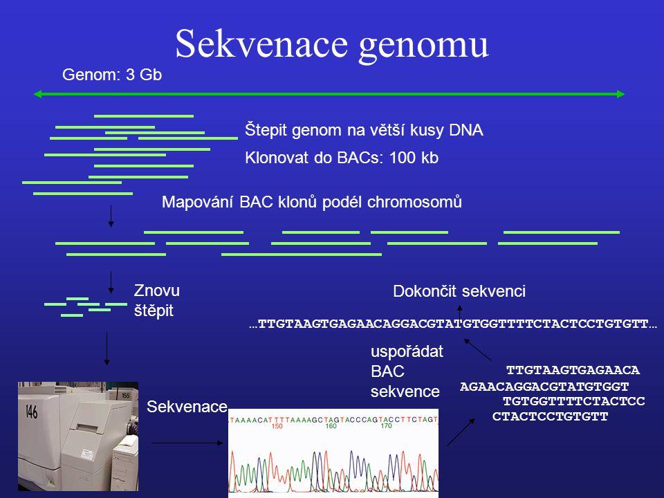 Sekvenace genomu Genom: 3 Gb Štepit genom na větší kusy DNA