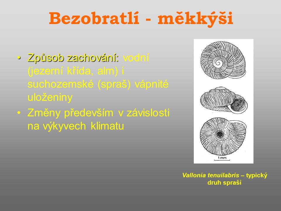 Vallonia tenuilabris – typický druh spraší