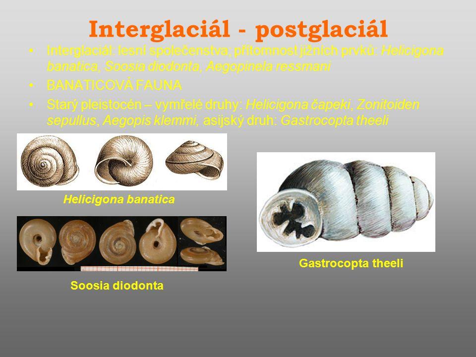 Interglaciál - postglaciál