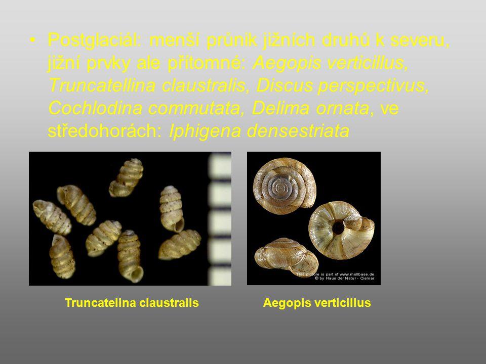 Postglaciál: menší průnik jižních druhů k severu, jižní prvky ale přítomné: Aegopis verticillus, Truncatellina claustralis, Discus perspectivus, Cochlodina commutata, Delima ornata, ve středohorách: Iphigena densestriata