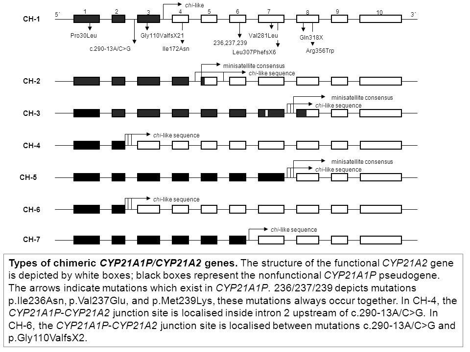 CH-1 CH-2. CH-3. minisatellite consensus. chi-like sequence. CH-4. CH-5. CH-6. CH-7. Pro30Leu.