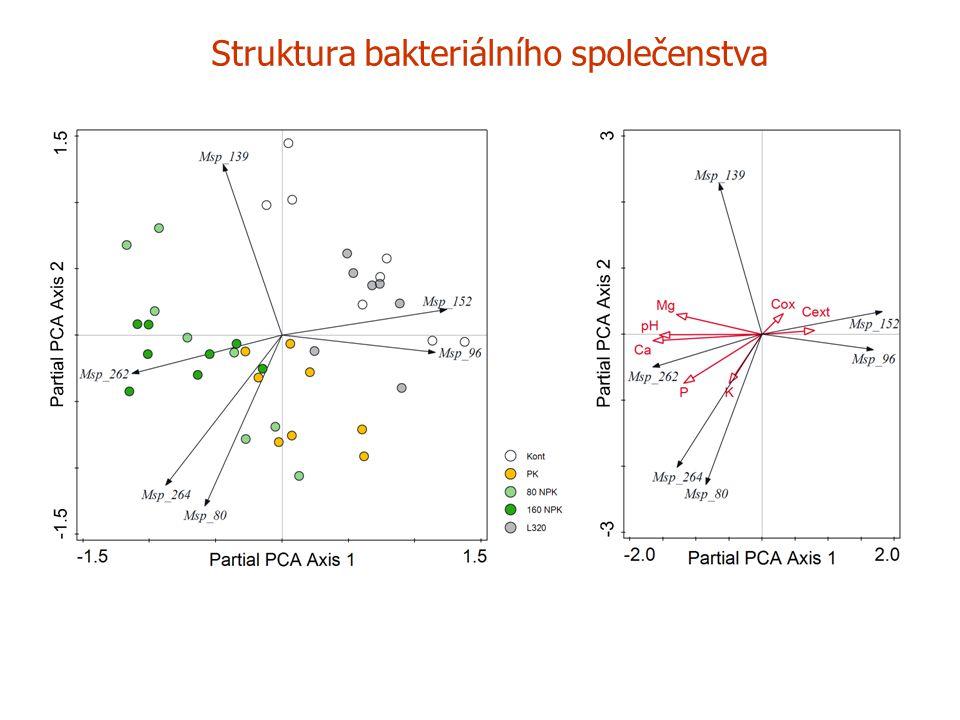 Struktura bakteriálního společenstva