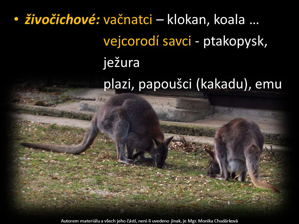 živočichové: vačnatci – klokan, koala … vejcorodí savci - ptakopysk,