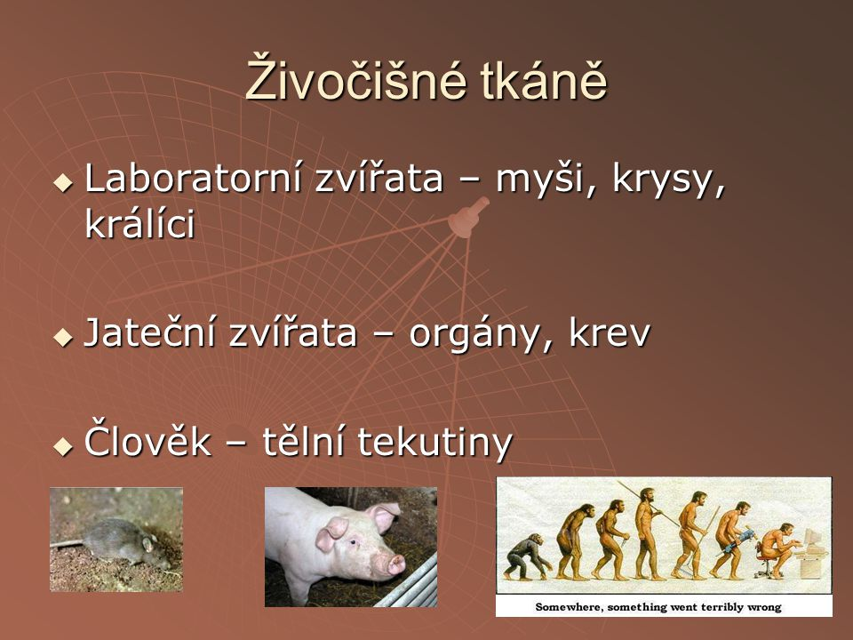 Živočišné tkáně Laboratorní zvířata – myši, krysy, králíci