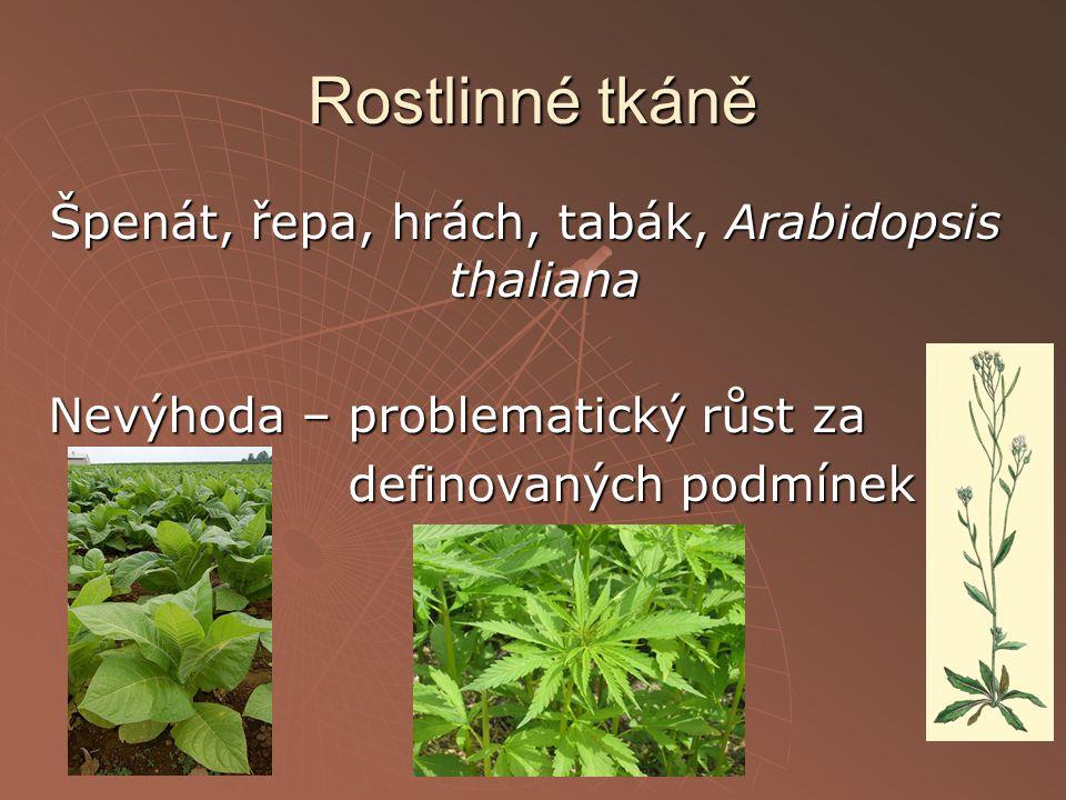 Rostlinné tkáně Špenát, řepa, hrách, tabák, Arabidopsis thaliana Nevýhoda – problematický růst za definovaných podmínek