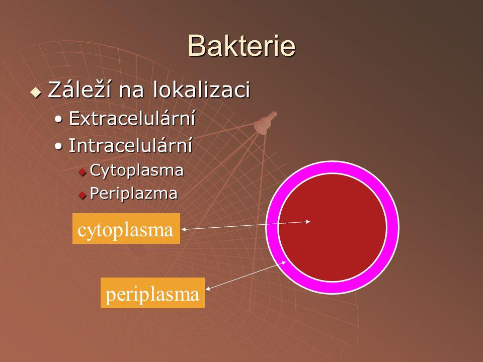 Bakterie Záleží na lokalizaci cytoplasma periplasma Extracelulární