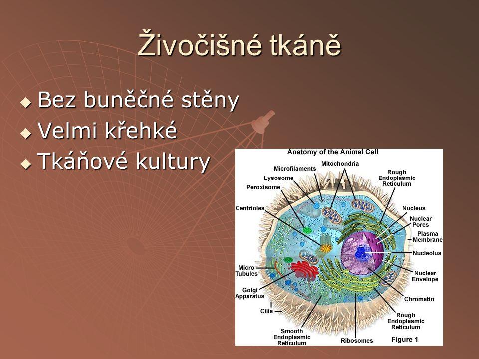 Živočišné tkáně Bez buněčné stěny Velmi křehké Tkáňové kultury