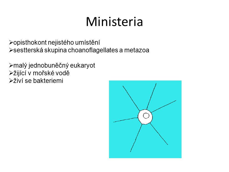 Ministeria opisthokont nejistého umístění