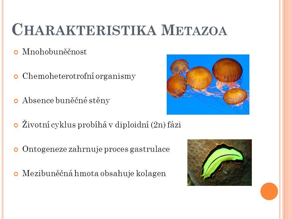 Charakteristika Metazoa