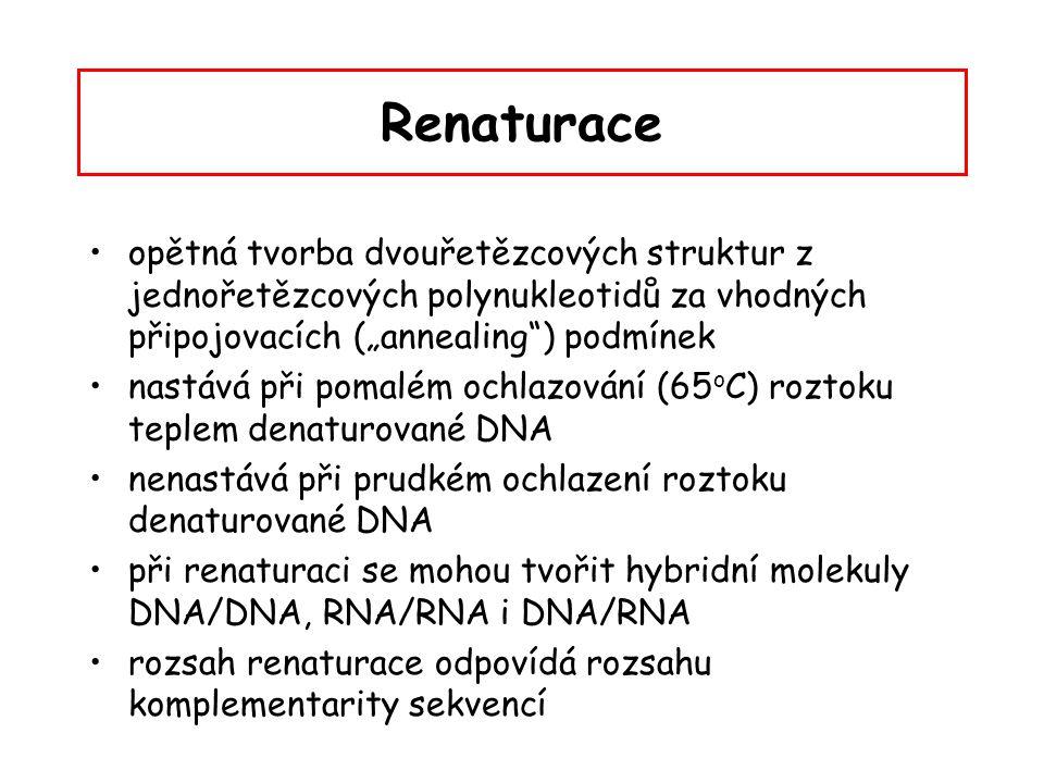 """Renaturace opětná tvorba dvouřetězcových struktur z jednořetězcových polynukleotidů za vhodných připojovacích (""""annealing ) podmínek."""