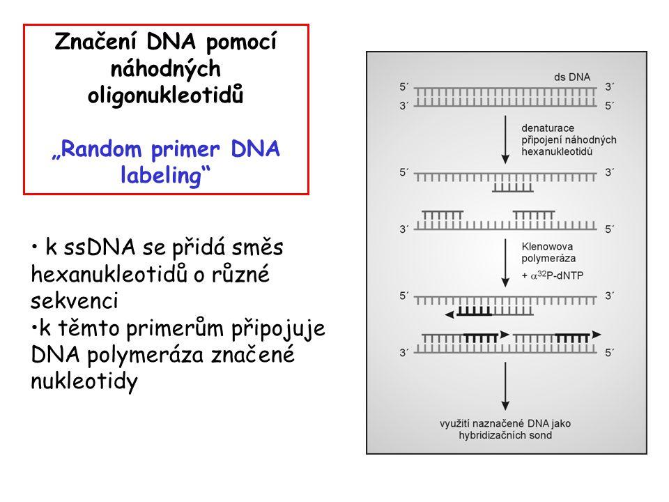 Značení DNA pomocí náhodných oligonukleotidů