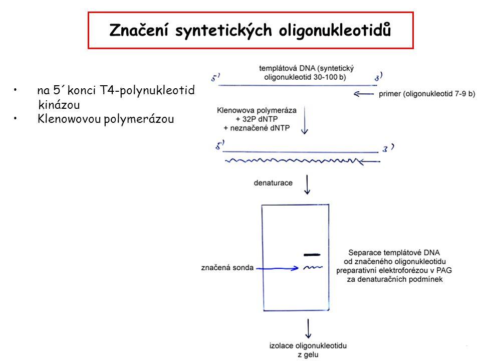 Značení syntetických oligonukleotidů
