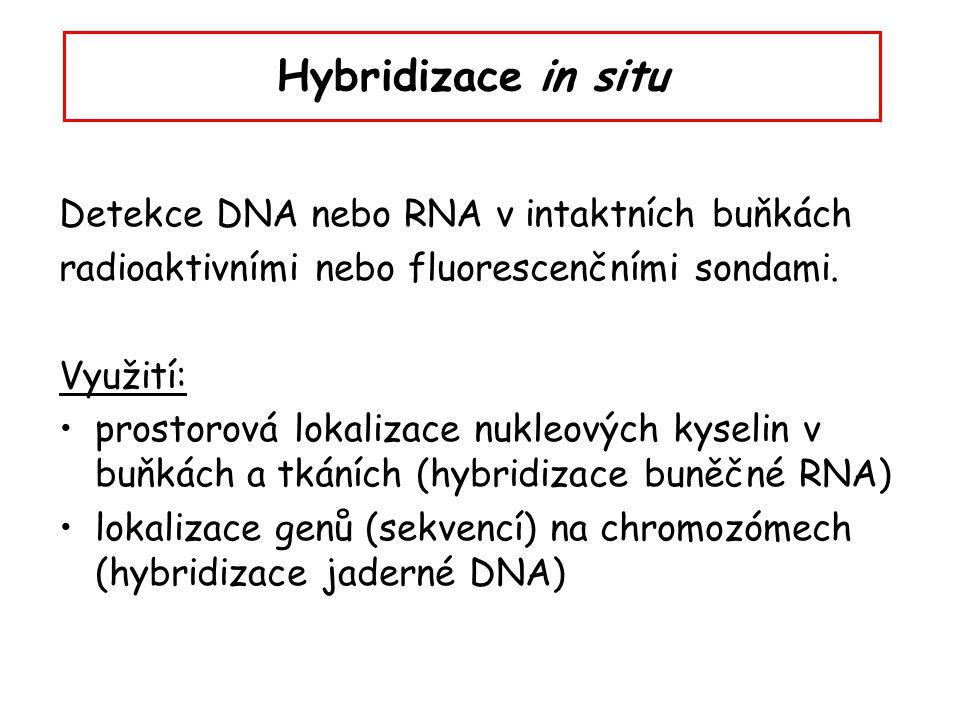 Hybridizace in situ Detekce DNA nebo RNA v intaktních buňkách