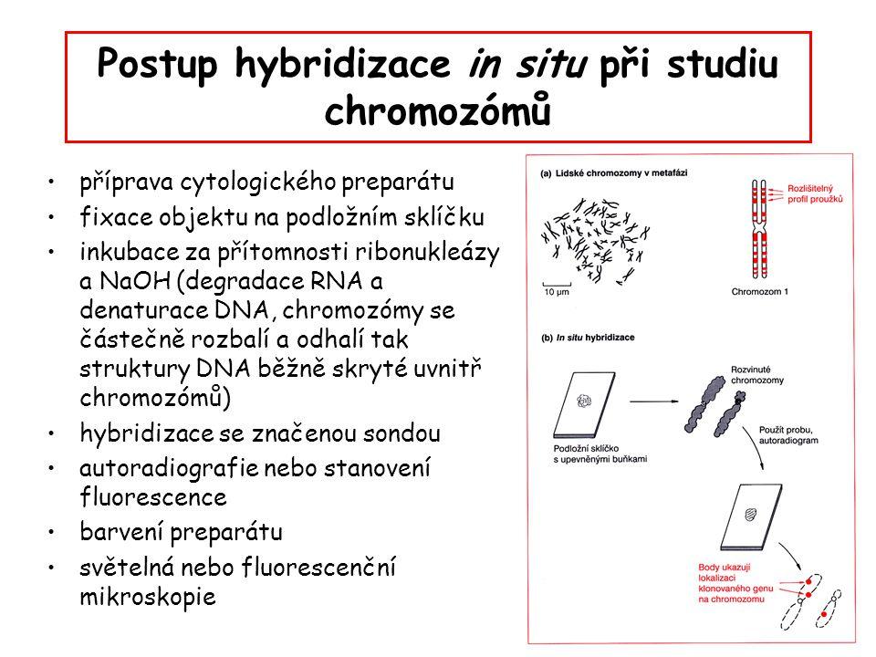 Postup hybridizace in situ při studiu chromozómů
