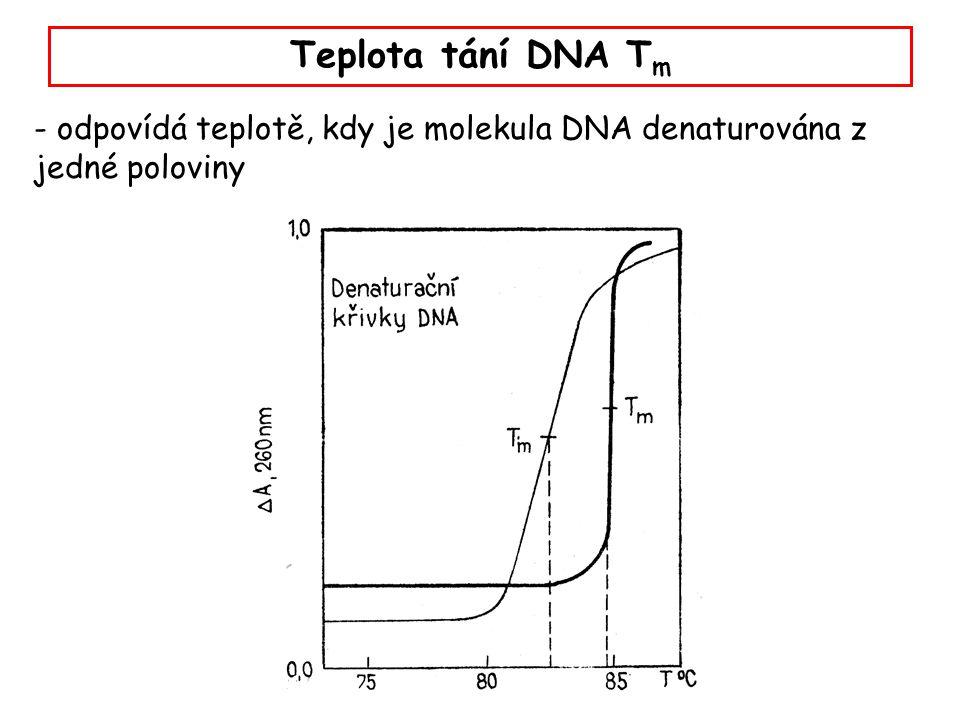 Teplota tání DNA Tm - odpovídá teplotě, kdy je molekula DNA denaturována z jedné poloviny