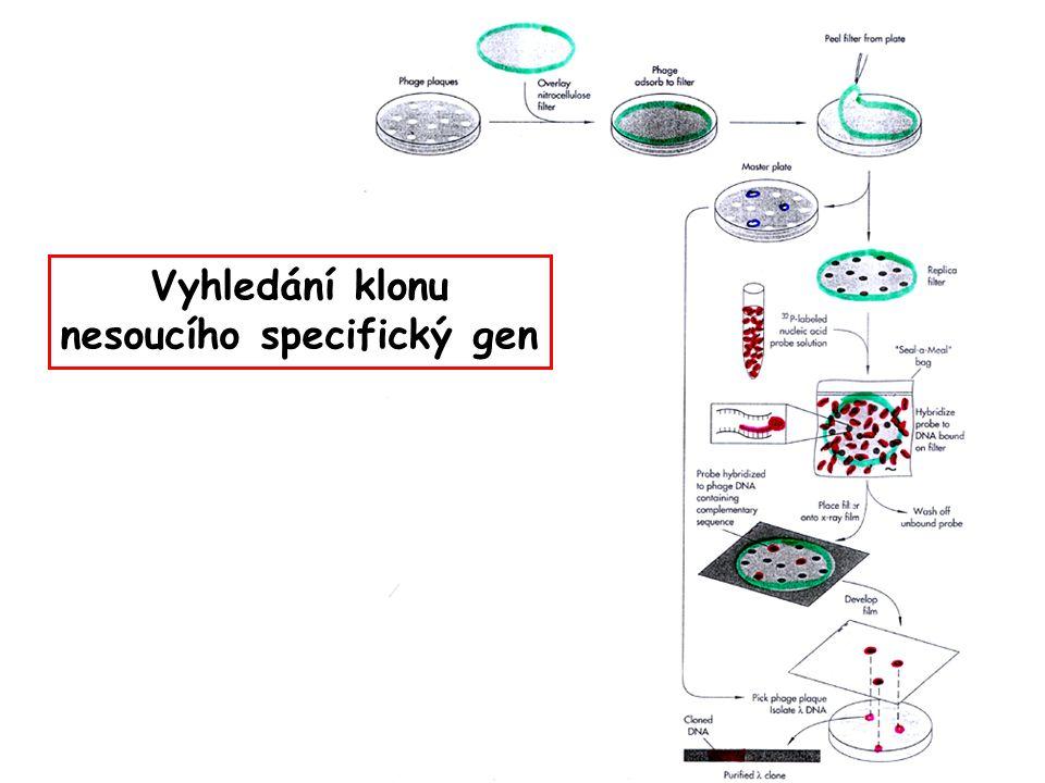 nesoucího specifický gen
