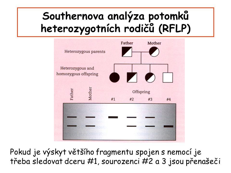Southernova analýza potomků heterozygotních rodičů (RFLP)