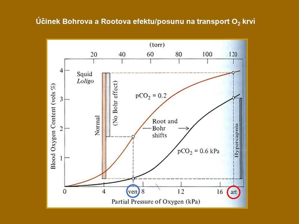 Účinek Bohrova a Rootova efektu/posunu na transport O2 krví