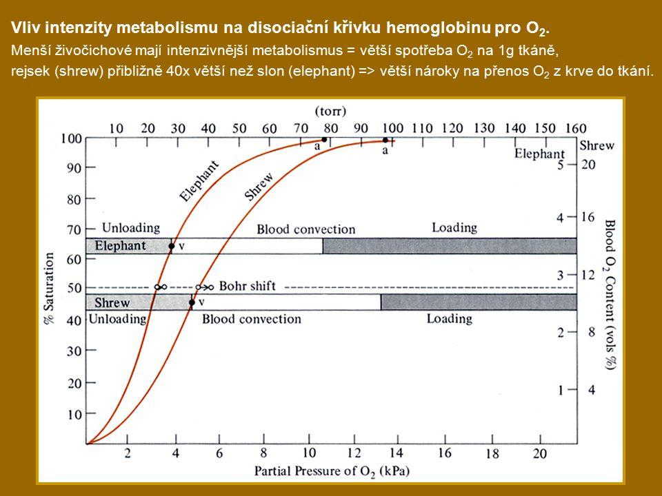 Vliv intenzity metabolismu na disociační křivku hemoglobinu pro O2.