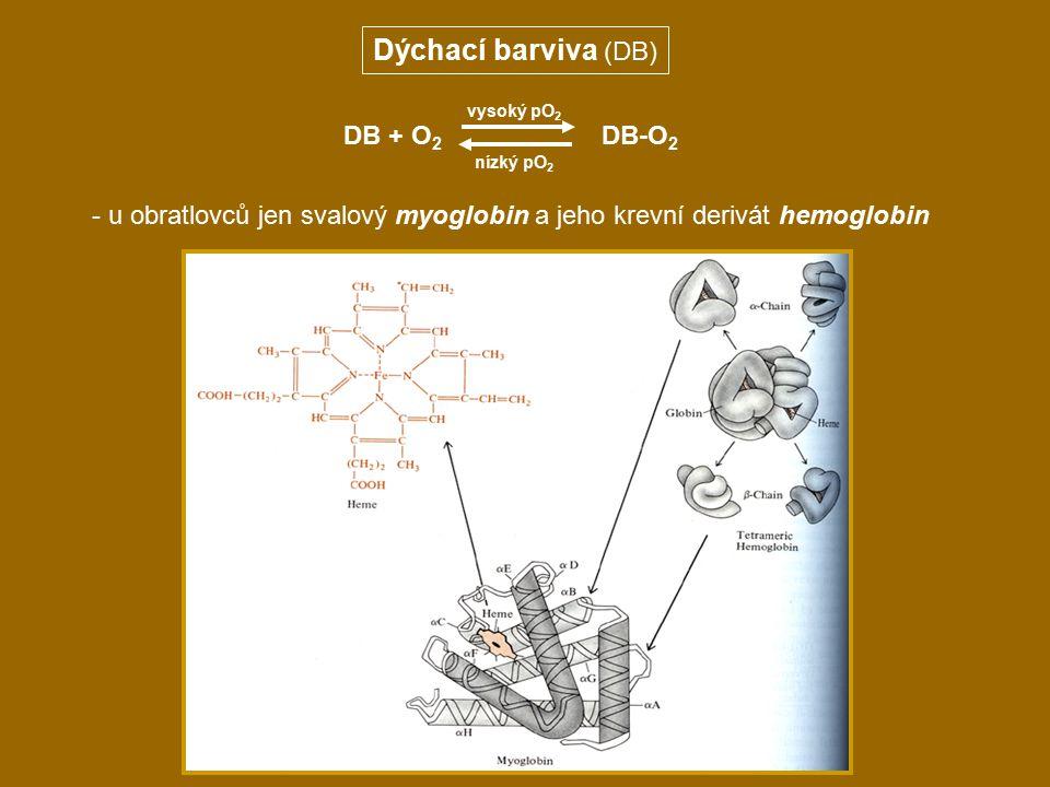 Dýchací barviva (DB) DB + O2 DB-O2